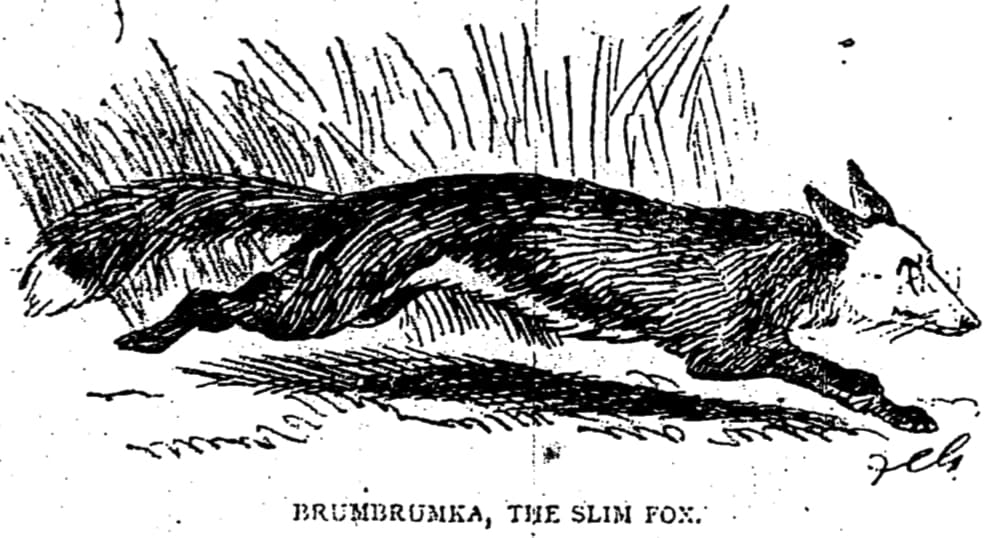 Brumbrumka, the Slim Fox, as drawn by Francis Carruthers Gould